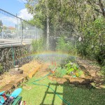 Nature at our kindy 3